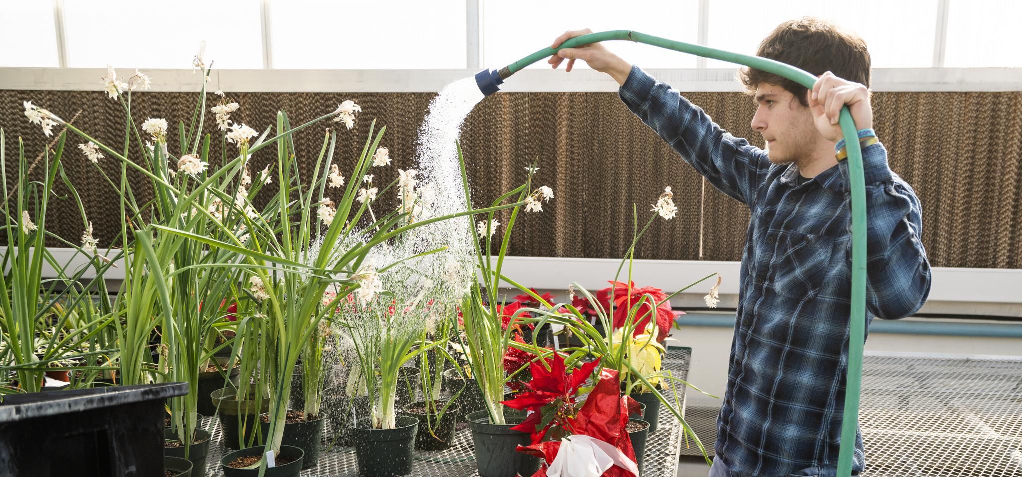 Horticulture student watering plants in the greenhouse